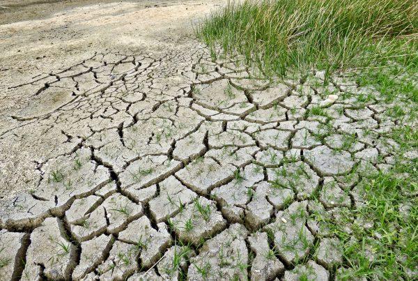 cambio climático en España: medidas para afrontarlo