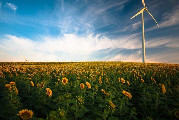 desarrollo verde y reciclaje