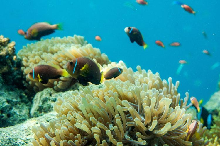 Contaminación por plásticos: la ONU protegerá los océanos