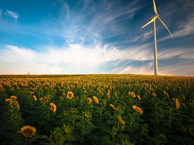 Desarrollo verde y reciclaje, solo así es posible la sostenibilidad