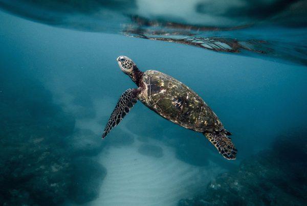 microplasticos en los oceanos