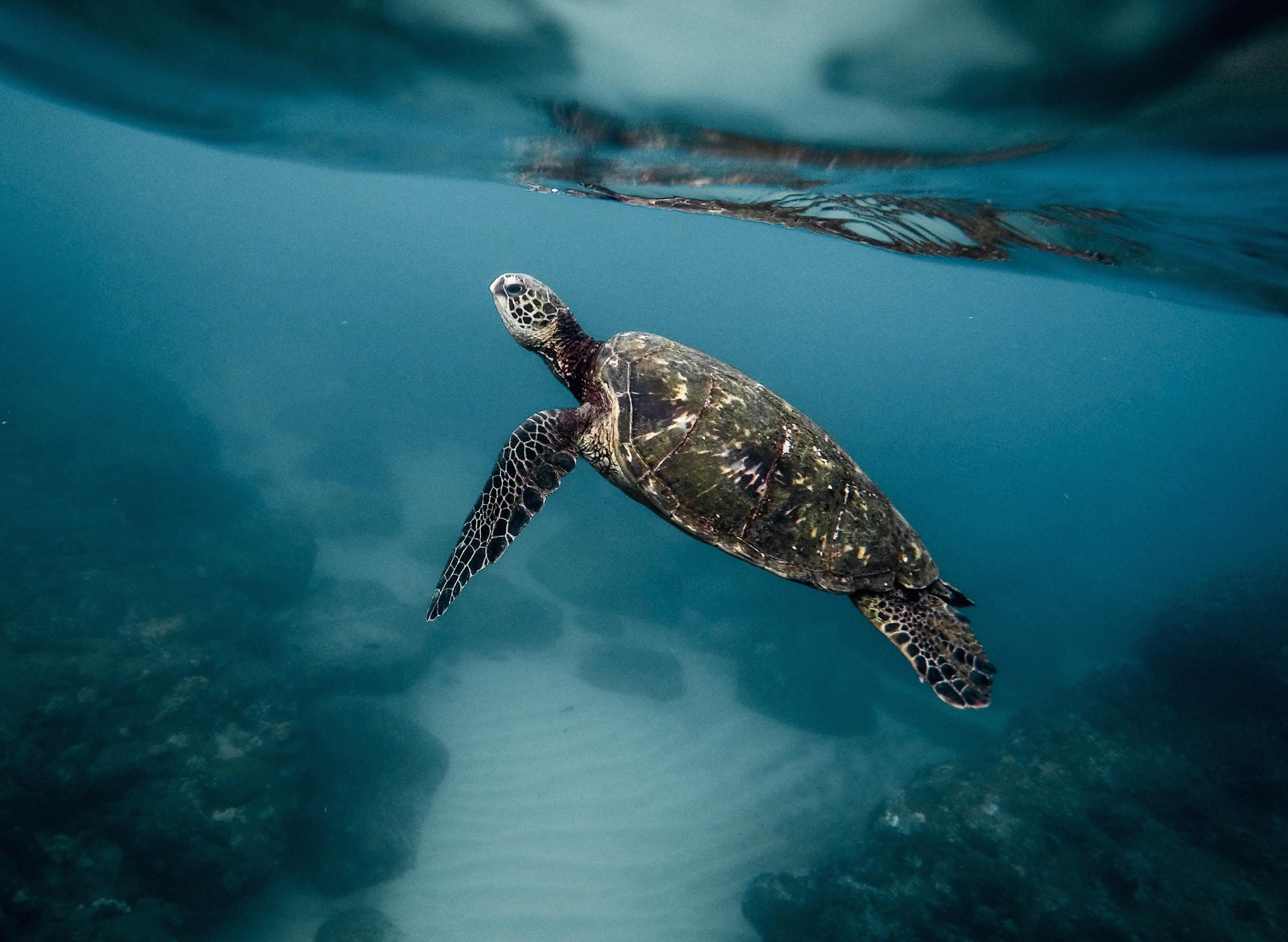 Microplásticos en los océanos: un problema que se agrava sin el reciclaje