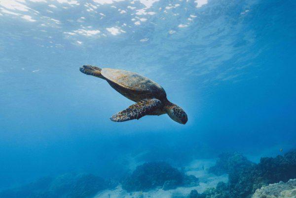 cuidado de los fondos marinos