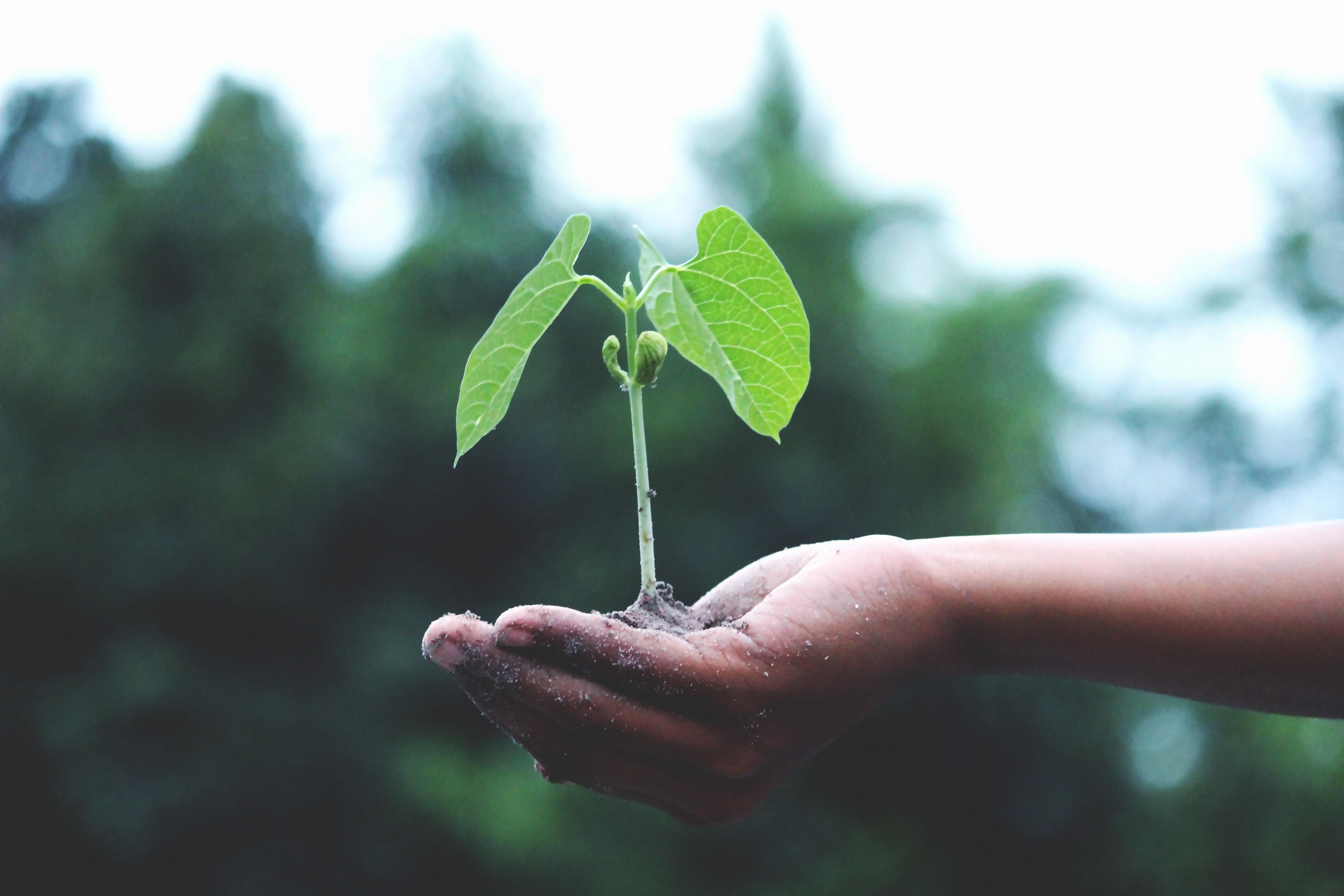 Las empresas cambian a favor del medio ambiente