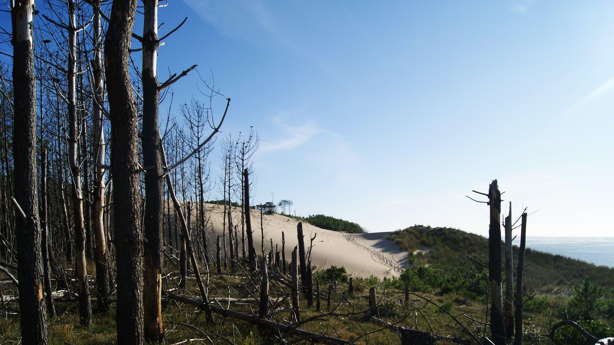Menos bosques, más enfermedades