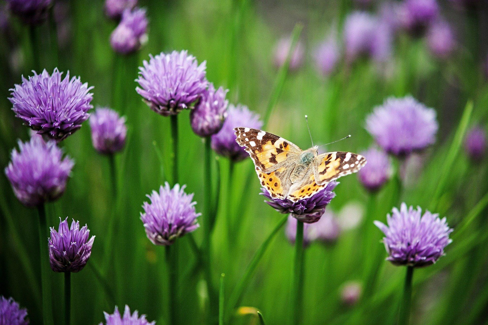 La importancia de la naturaleza para todos