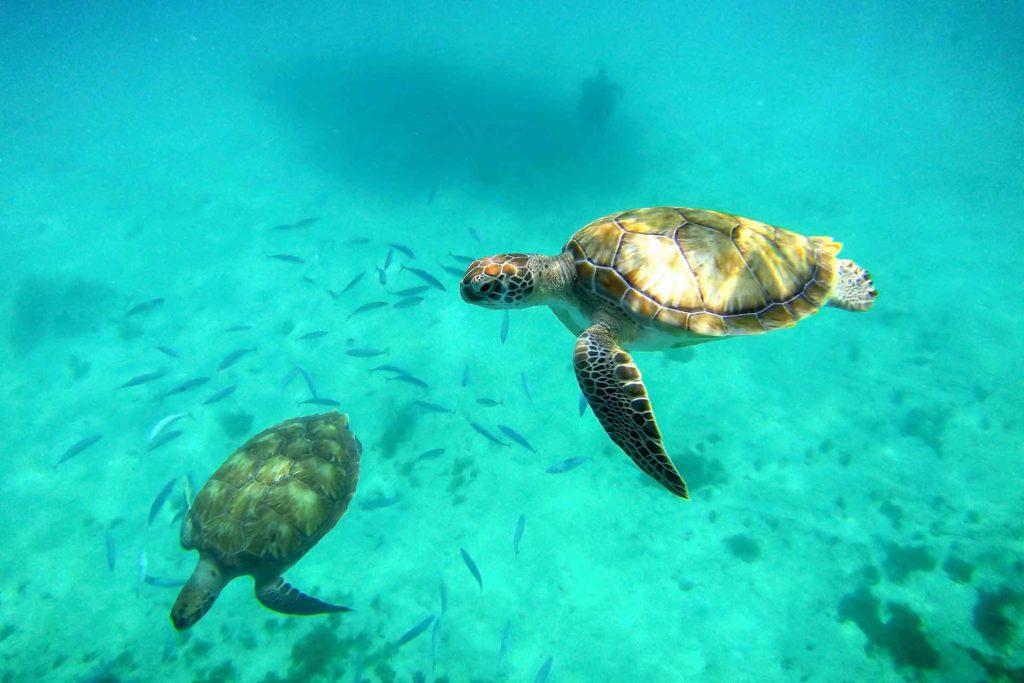Una de las 4 consecuencias del plástico en el mar es la alteración en la alimentación y la vida de las tortugas y otras especies marinas.