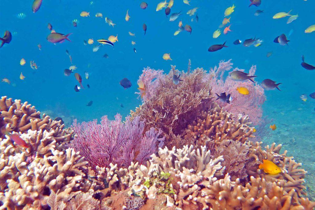 Los arrecifes de coral están en peligro de extinción.