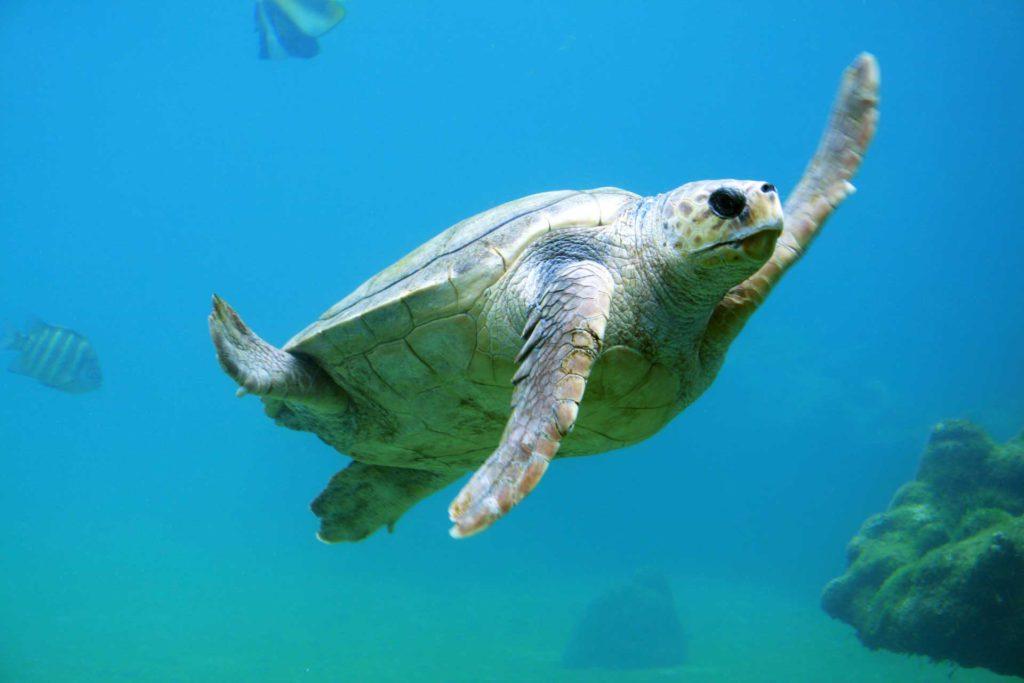 Salvar nuestras playas y océanos es fundamental para seguir disfrutando de ellos.